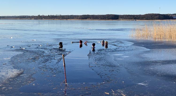 Vinterbad. En grupp människor badar mitt i vintern i e isvak.